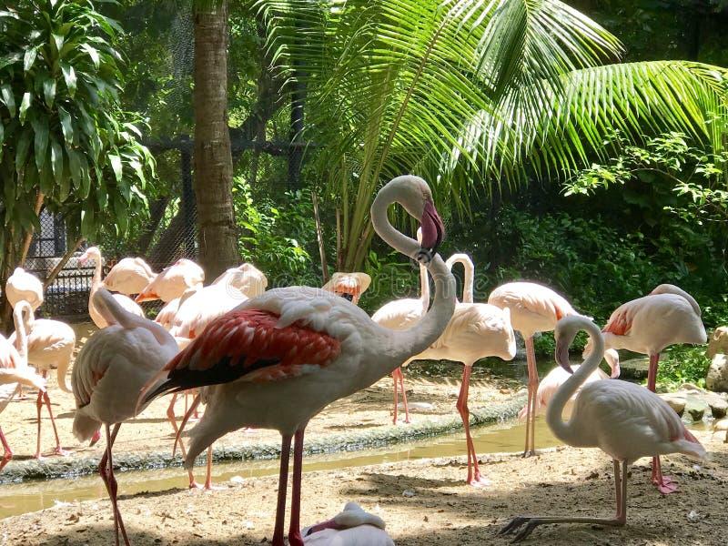 鸟动物园  免版税库存图片