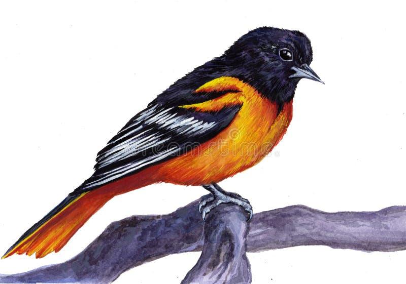 鸟北美山雀 免版税库存图片