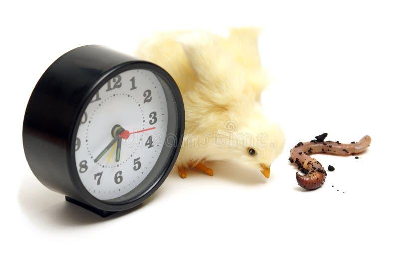 鸟及早获得蠕虫 图库摄影