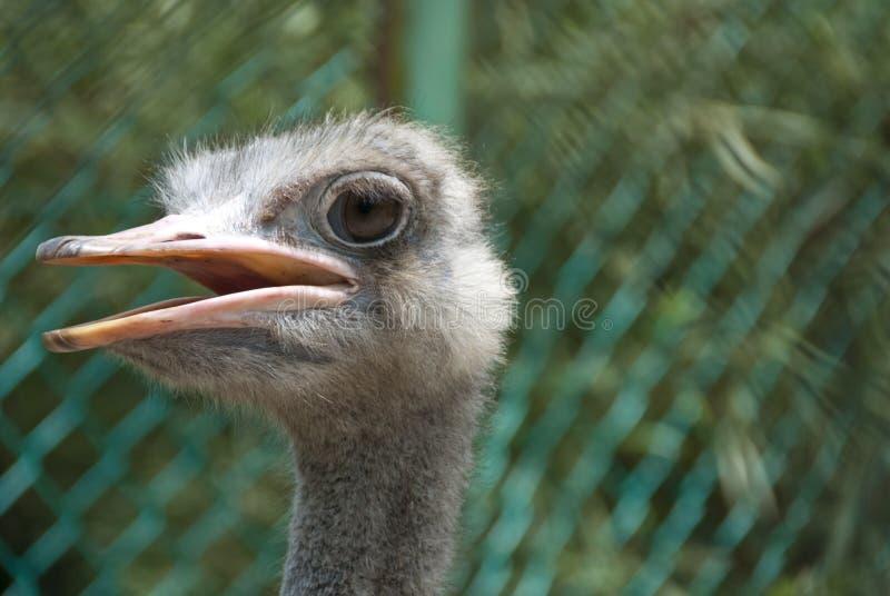 鸟吉隆坡公园 免版税库存图片