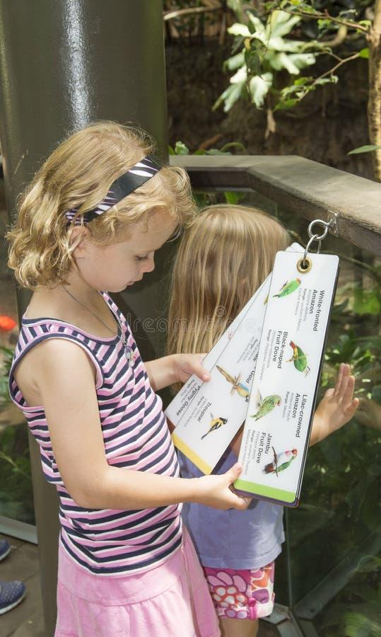 读鸟名单的孩子在动物园 免版税图库摄影