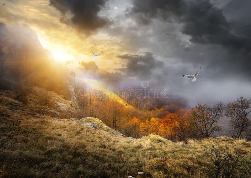 鸟和云彩 免版税库存图片