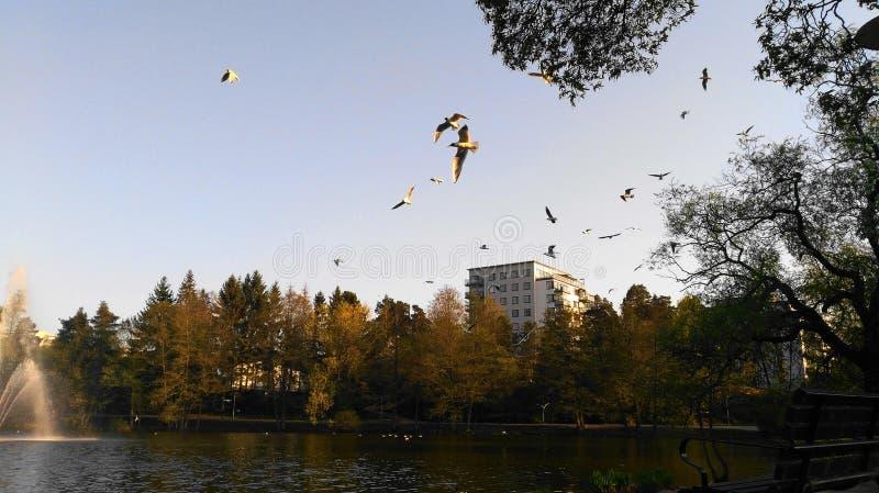 鸟和喷泉在湖Sundbyberg的,斯德哥尔摩,瑞典 库存图片