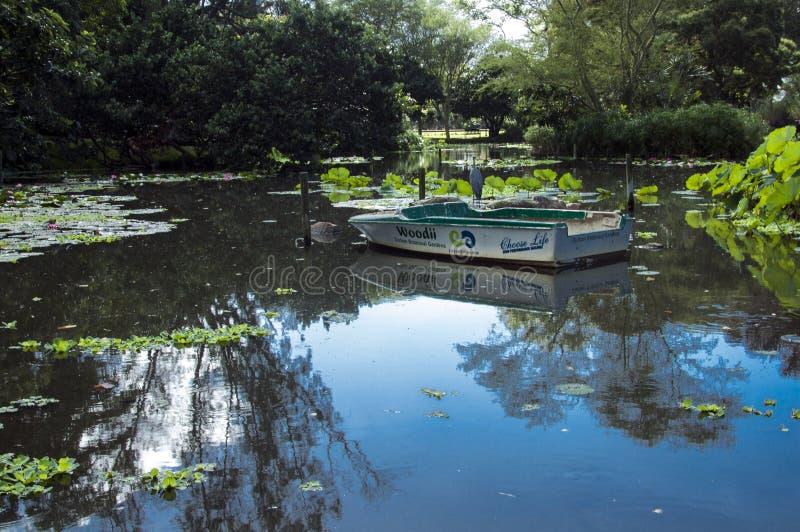 鸟和小船在池塘在Batanical庭院里 库存照片