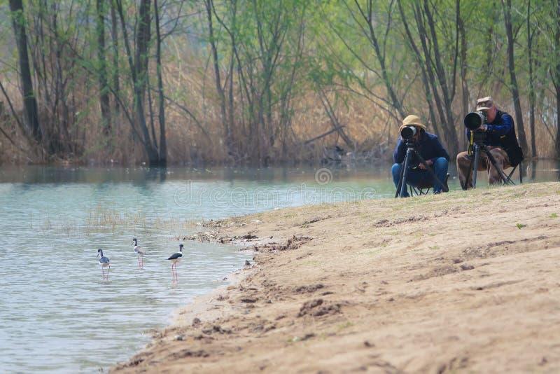 鸟和摄影师 图库摄影