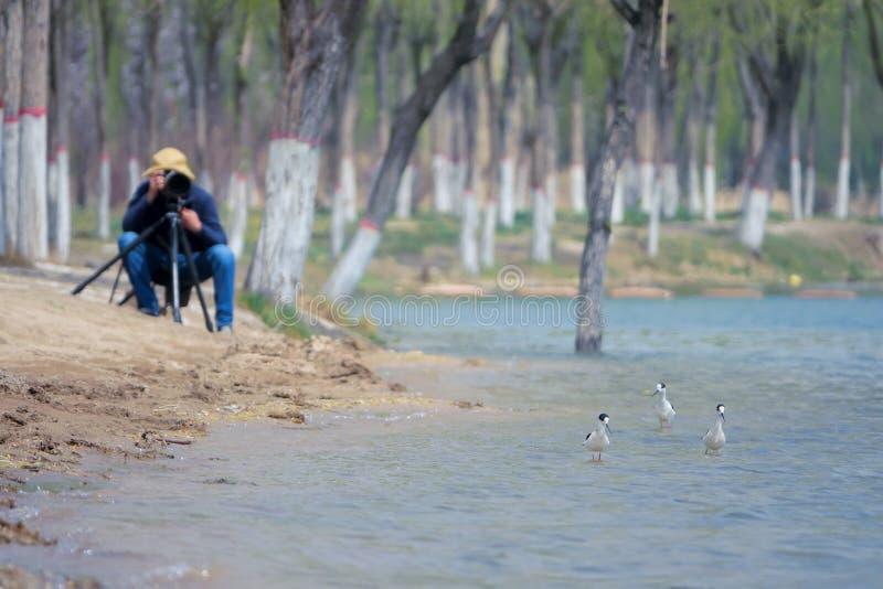 鸟和摄影师 库存照片