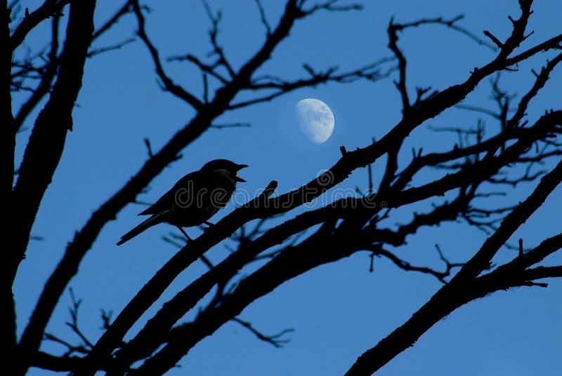 鸟和月亮 免版税库存图片