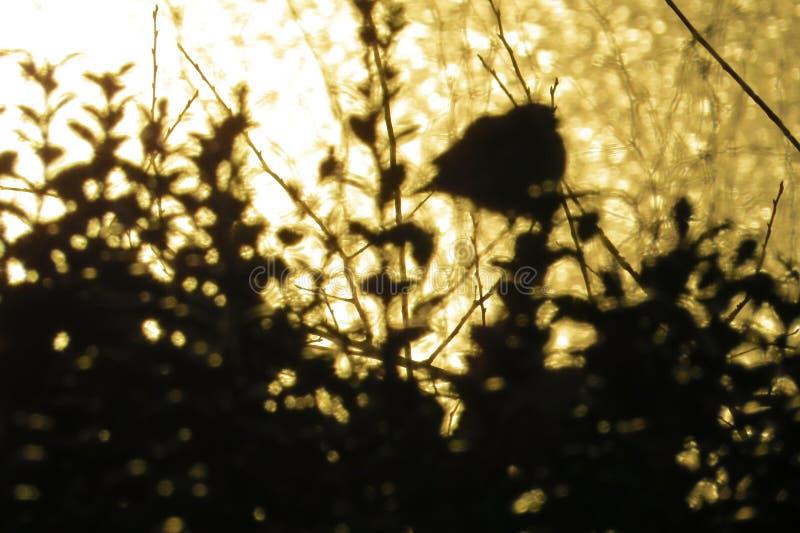 鸟和灌木剪影在日落染黄湖背景 库存照片