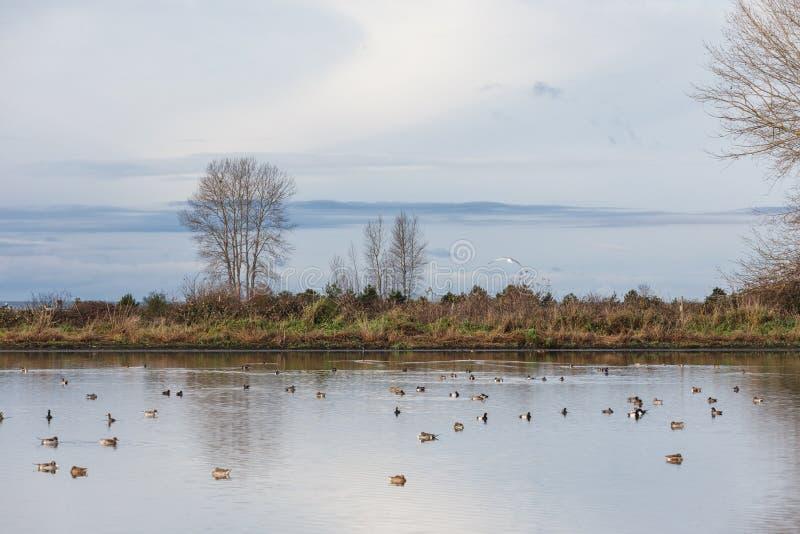 鸟和自然 库存图片
