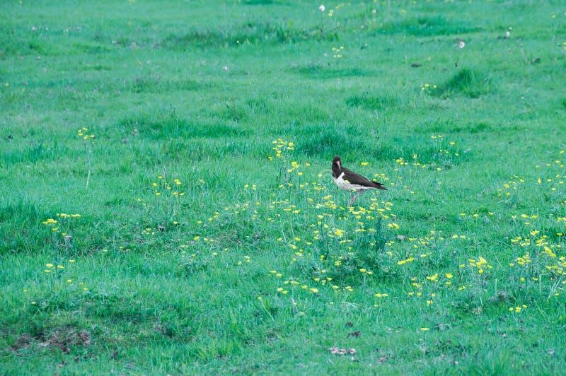 鸟在他们的自然生态环境 免版税图库摄影