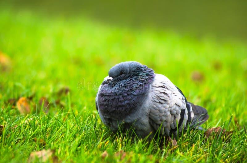 鸟在公园有秋天背景 免版税库存图片