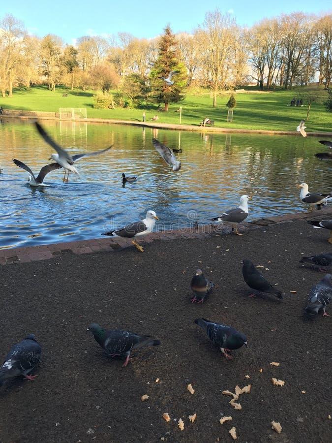 鸟在公园 免版税库存图片