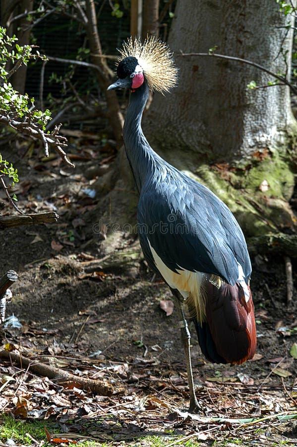 鸟在圣地亚哥动物园的封入物 图库摄影