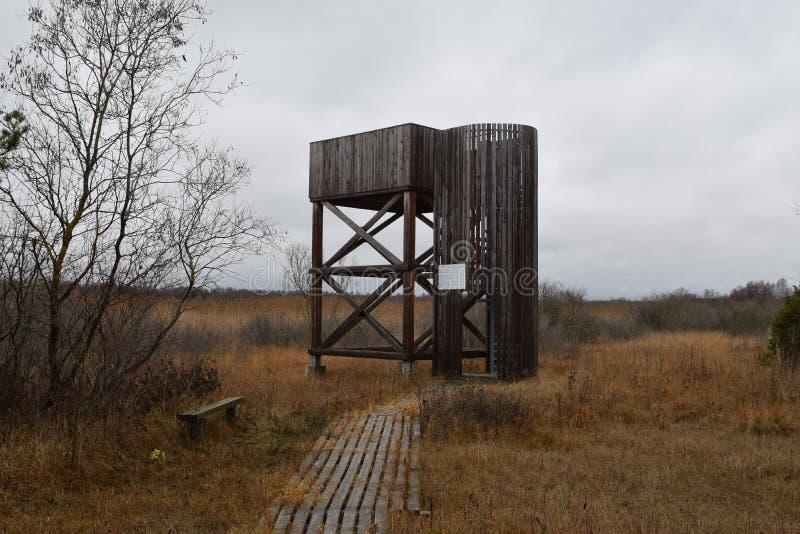 鸟在沼泽地附近的观测台 免版税库存照片