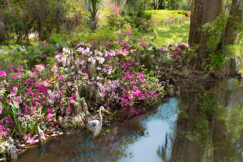 鸟在湖的美丽的庭院里 库存照片