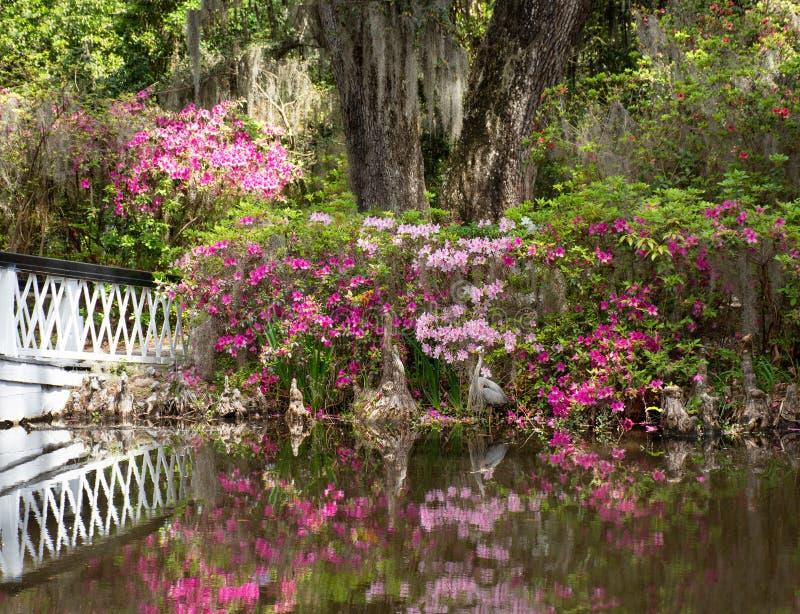 鸟在湖的美丽的开花的庭院里 免版税图库摄影