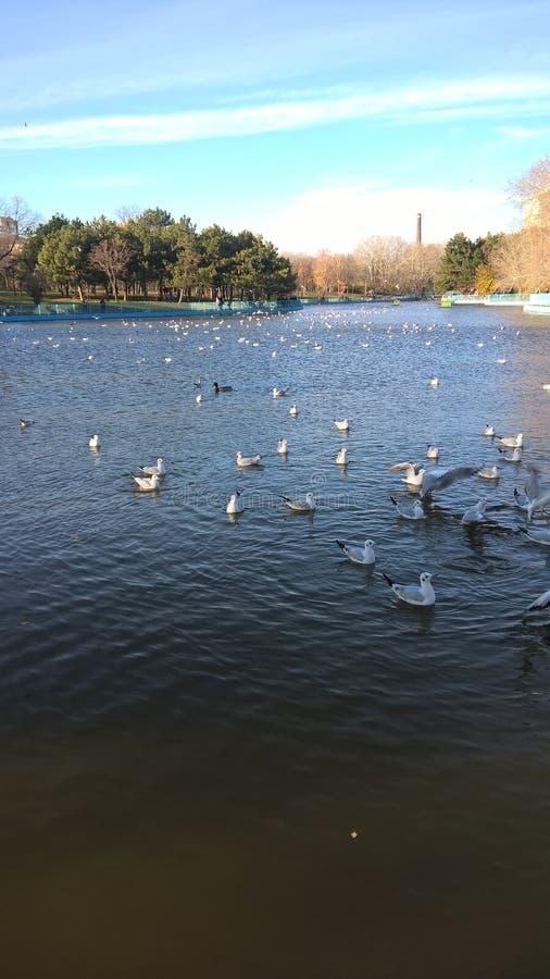 鸟在湖 免版税库存图片