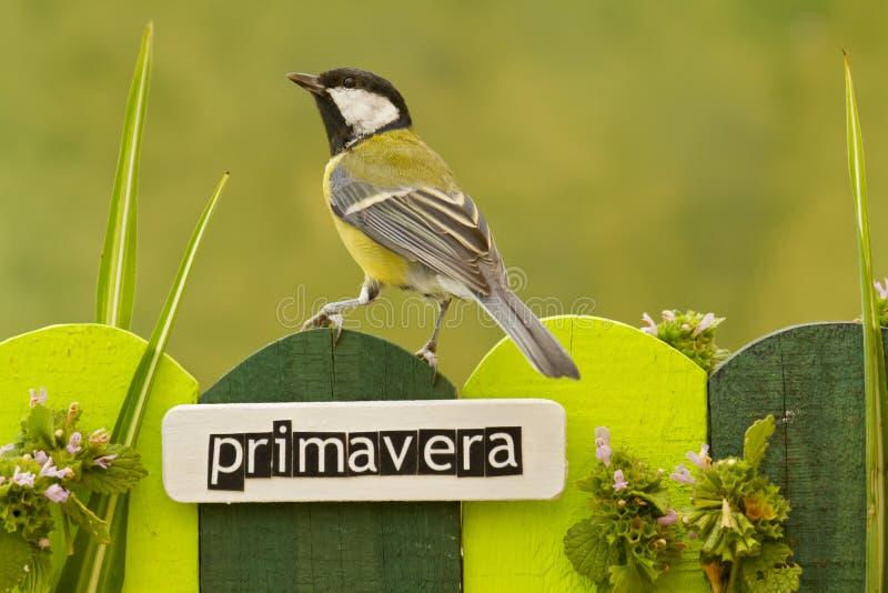 鸟在用在西班牙语的词春天装饰的篱芭栖息 库存照片