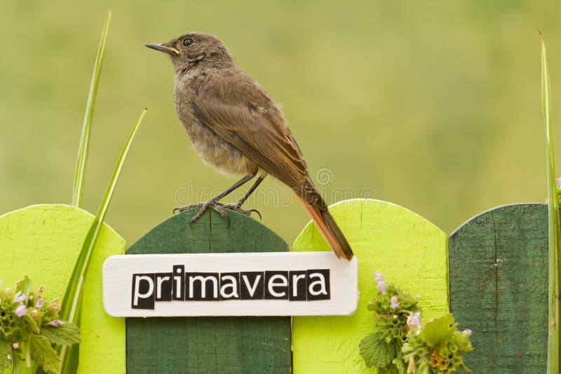 鸟在用在西班牙语的词春天装饰的篱芭栖息 库存图片