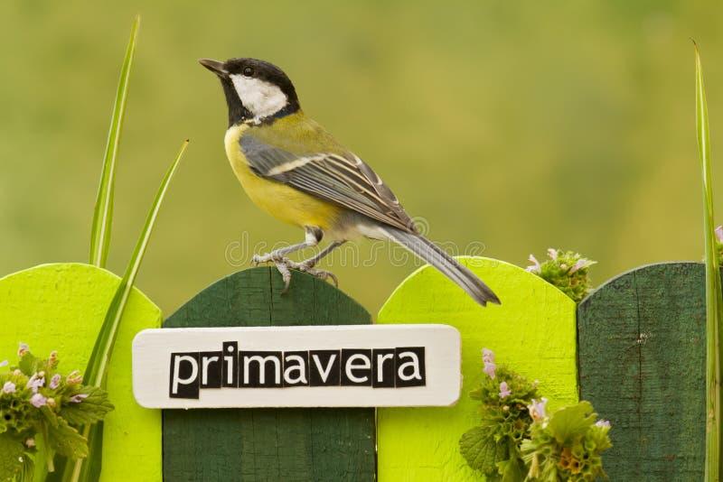 鸟在用在西班牙语的词春天装饰的篱芭栖息 图库摄影