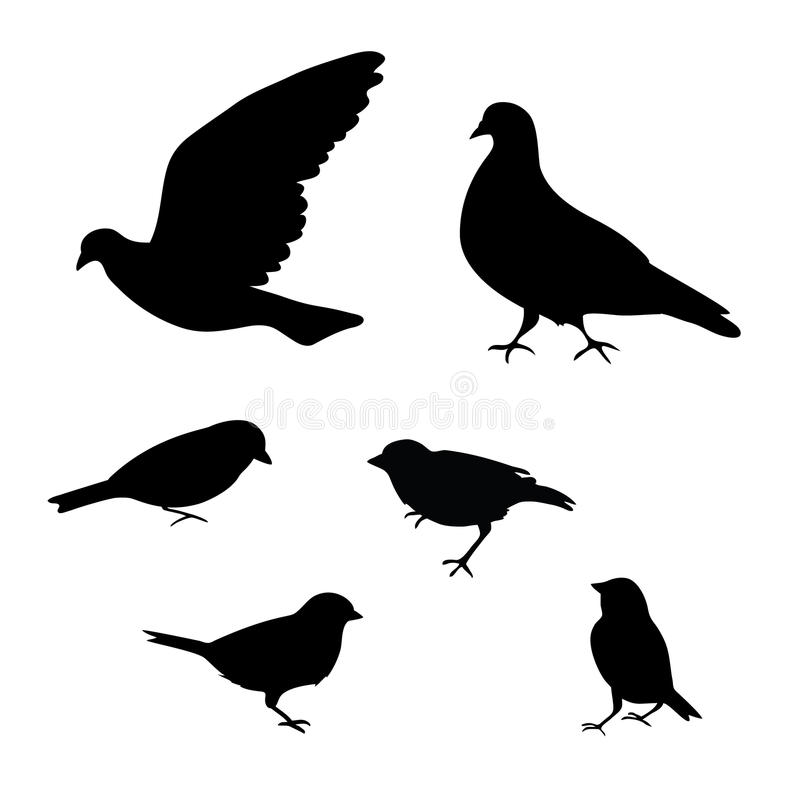 鸟在白色背景,传染媒介现出轮廓 向量例证