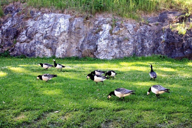 鸟在草甸 库存照片