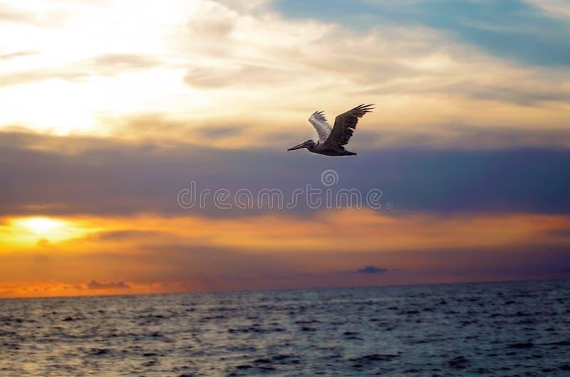 鸟在飞行中在墨西哥天空下 免版税图库摄影