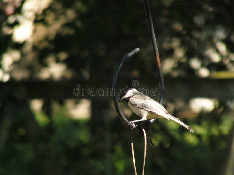 鸟在鸟饲养者的勾子登陆了 库存照片