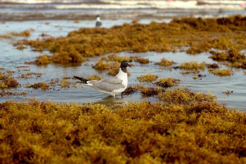 鸟在水中 库存照片