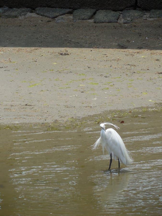鸟在水中 免版税库存照片