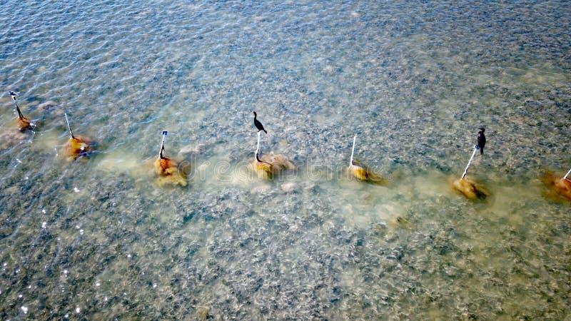鸟坐木杆在佛罗里达群岛,美国 库存照片