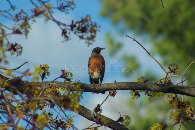 鸟坐树枝 免版税库存图片