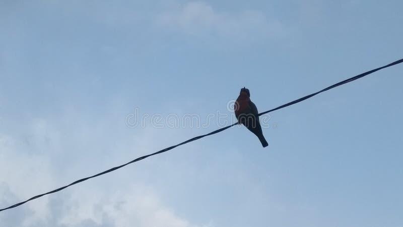 鸟坐的导线 免版税库存照片