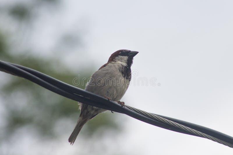 鸟坐的电汇 库存图片