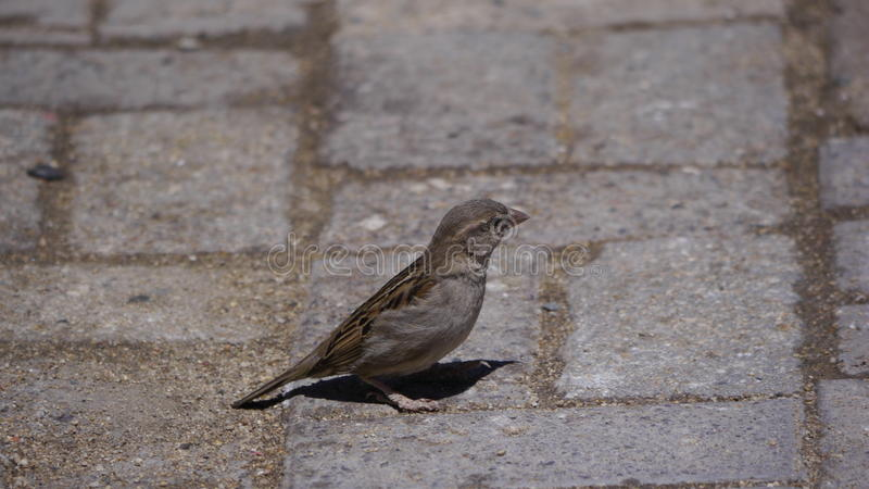 鸟外形 免版税图库摄影