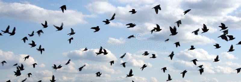 鸟天空 免版税库存照片