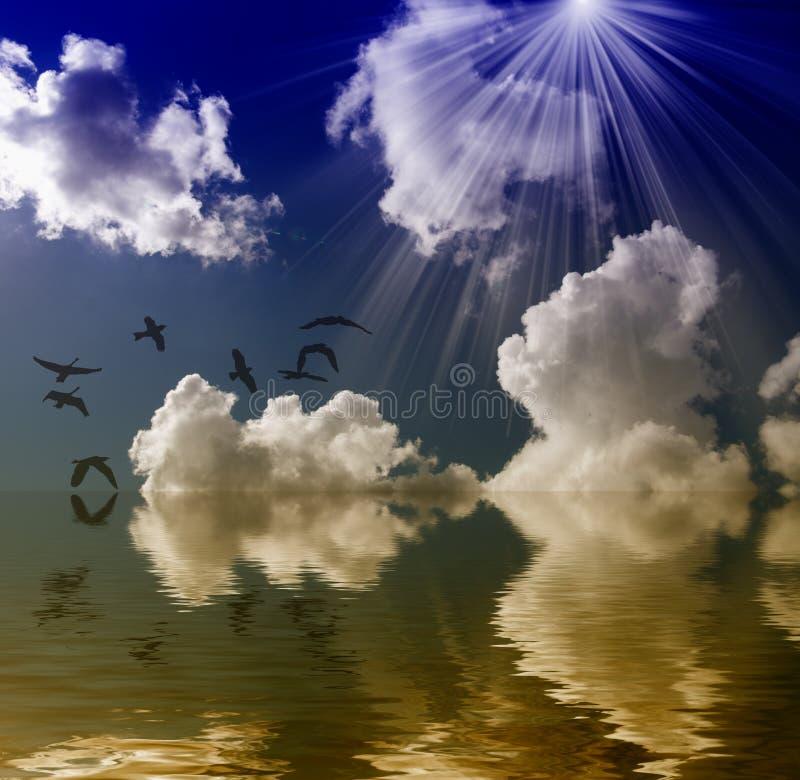 鸟太阳,海运和云彩 免版税库存图片