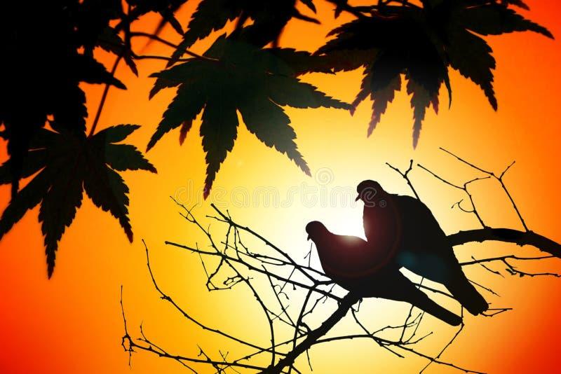 鸟夫妇在秋天 免版税库存照片
