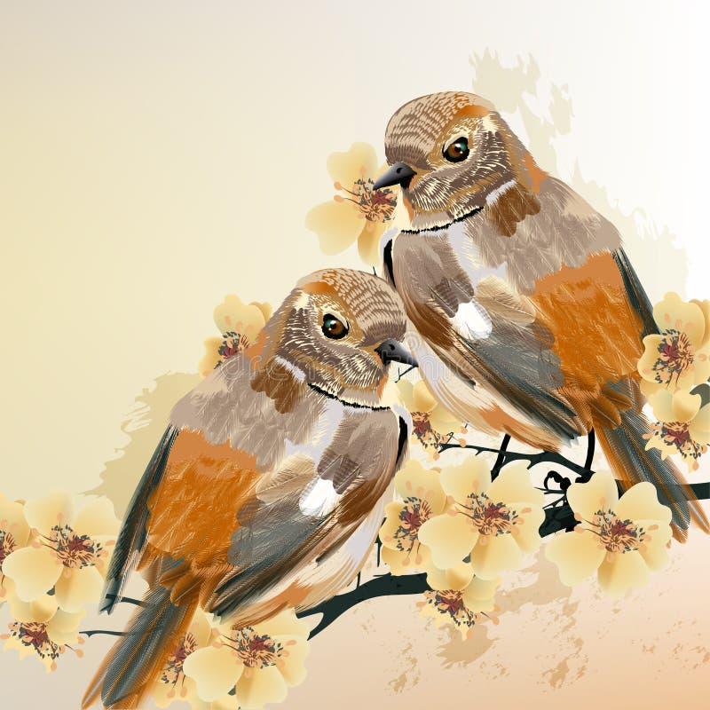 鸟夫妇坐一棵开花的分支树 库存例证