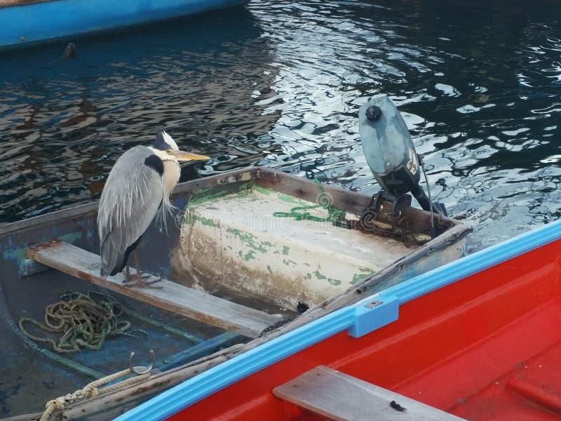 鸟小船 图库摄影