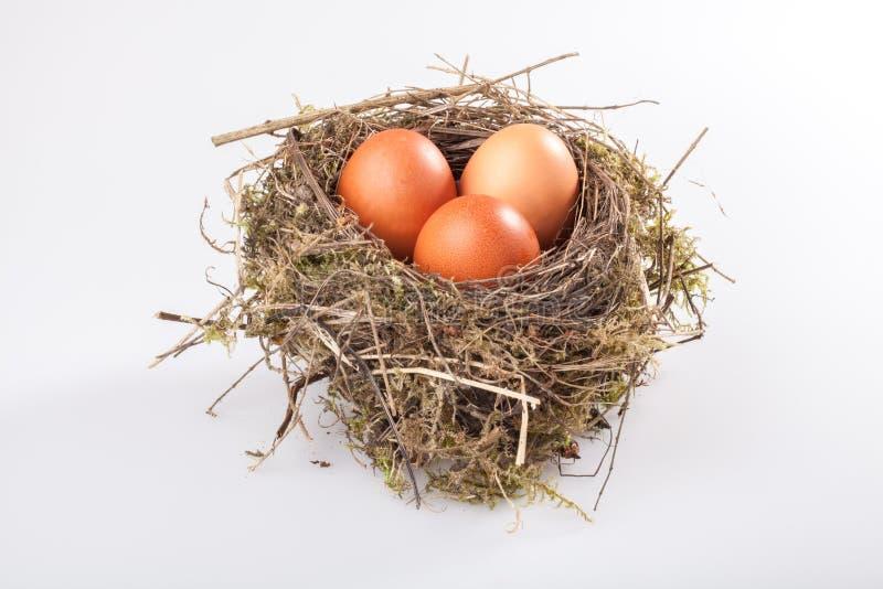 鸟巢用鸡蛋 免版税库存照片