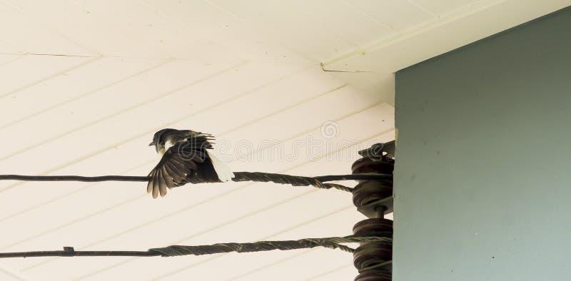 鸟开始对飞行 库存照片