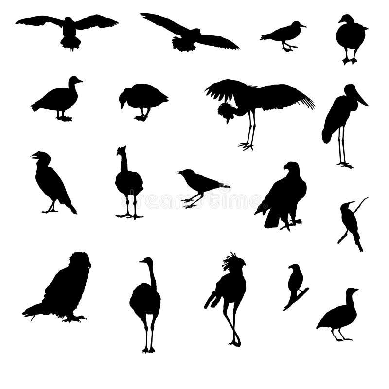 鸟异乎寻常的例证查出的向量 库存例证