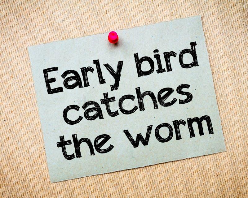 鸟捉住早期的蠕虫 免版税图库摄影