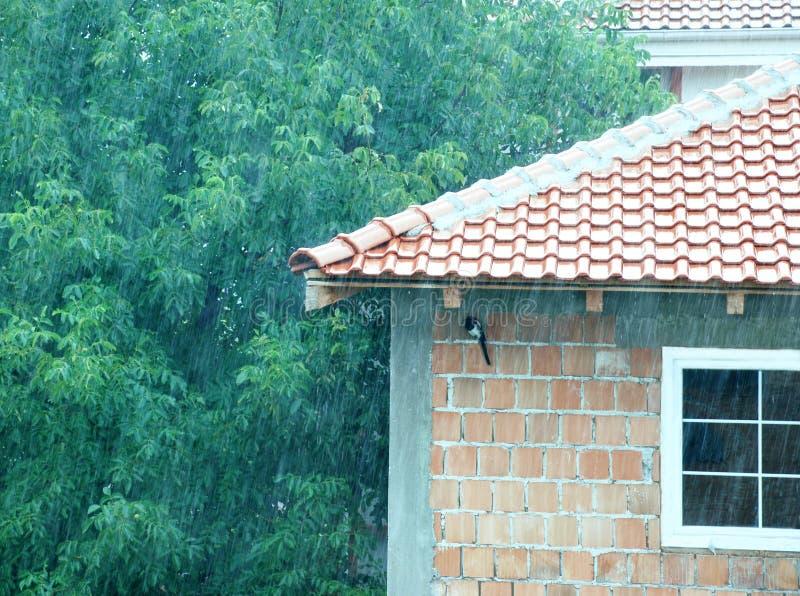 鸟日隐藏多雨 免版税库存照片
