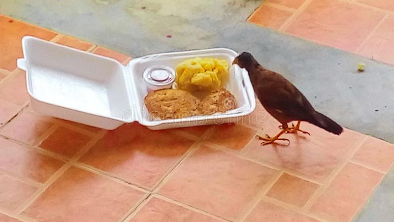 鸟早餐 免版税库存照片