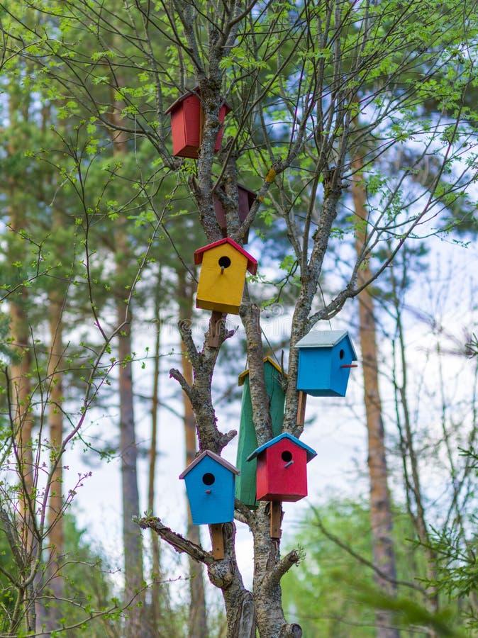 鸟树的色的房子 库存照片