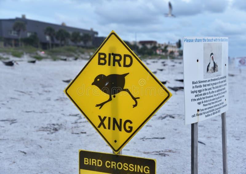 鸟横穿标志在由于的印度岩石海滩染黑漏杓饲养 免版税图库摄影