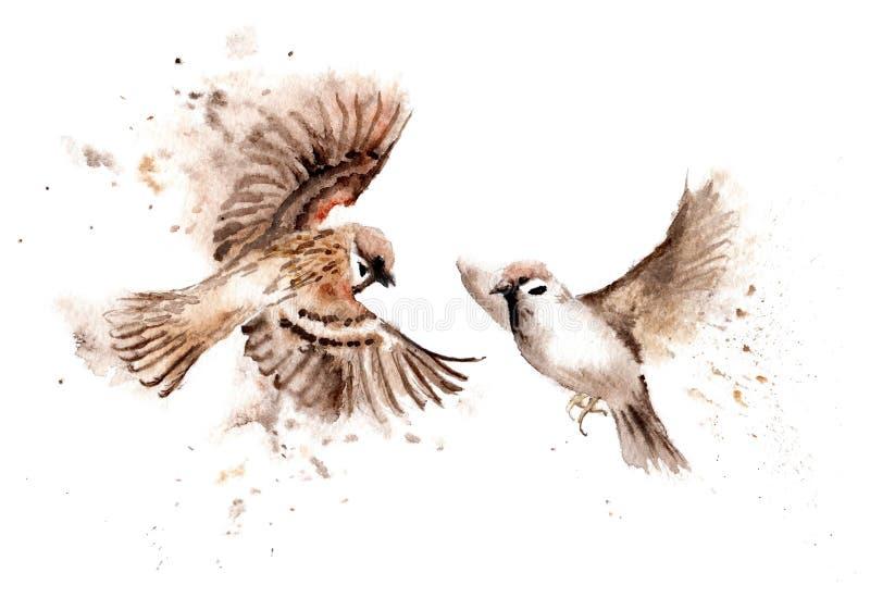 鸟水彩图画  一个对高昂麻雀 向量例证