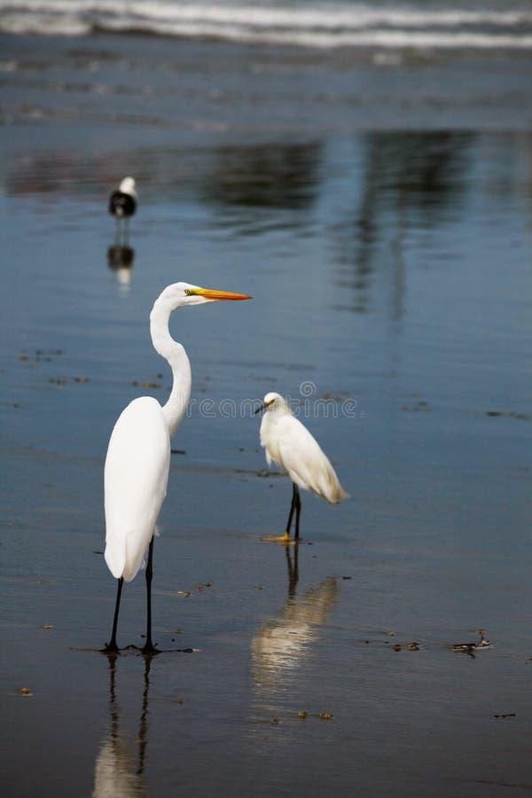 鸟海岸线 免版税库存照片